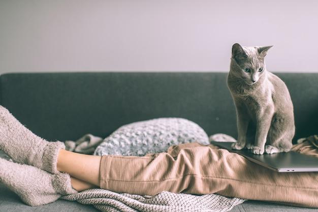 Mooi katje dat op bed ligt Premium Foto