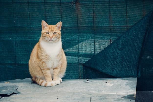 Mooi kattenportret in de straat Premium Foto