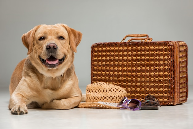 Mooi labrador met de koffer Gratis Foto