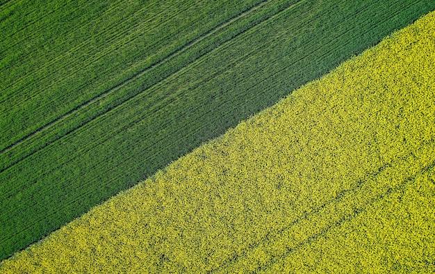 Mooi landbouw half groen half geel grasgebied dat met een hommel is ontsproten Gratis Foto