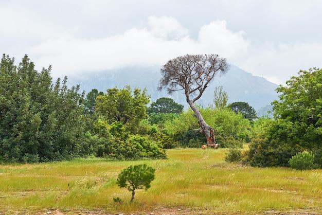 Mooi landschap met bomen op het gazon op bergen. Gratis Foto