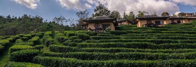 Mooi landschap tijdens zonsopgang bij chinees dorp onder theeaanplanting bij verbod rak thai, mae hong son in thailand Premium Foto