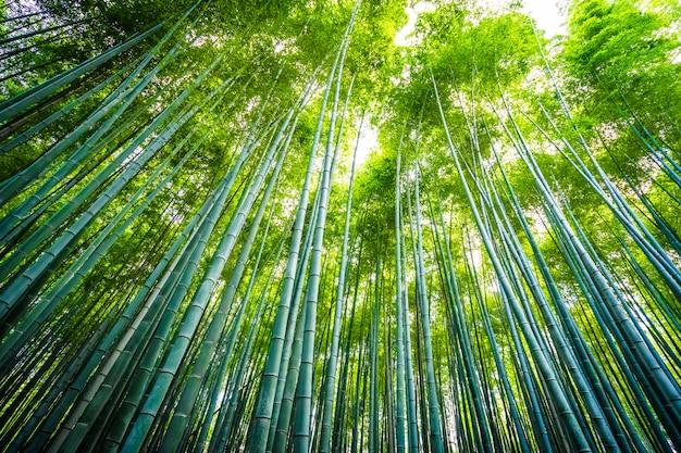 Mooi landschap van bamboebosje in het bos in arashiyama kyoto Gratis Foto