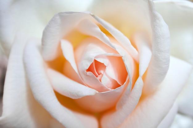 Mooi nam bloemclose-up toe Premium Foto