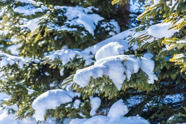 Mooi openluchtaardlandschap met kerstmisboom Gratis Foto