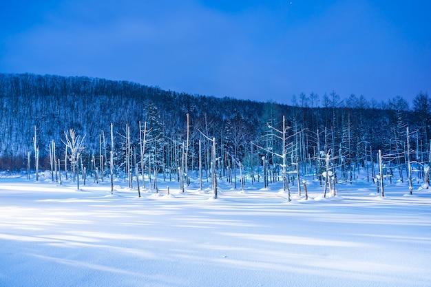 Mooi openluchtlandschap met blauwe vijverrivier bij nacht met licht omhoog in sneeuwwinterseizoen Gratis Foto