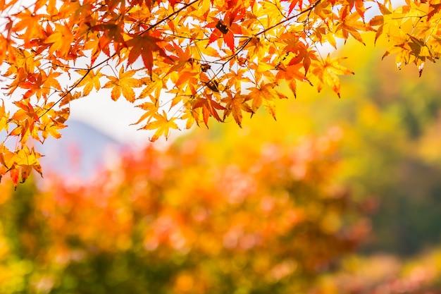 Mooi rood en groen esdoornblad op boom Gratis Foto