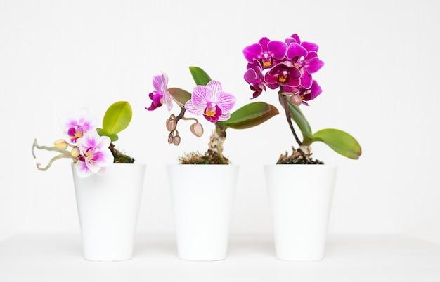 Mooi schot van bloemen in de witte plantenbakpotten met een witte achtergrond Gratis Foto