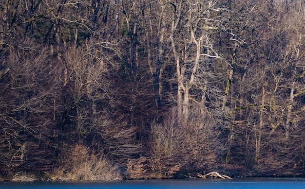 Mooi schot van bos op een oever van het meer in maksimir park in zagreb, kroatië overdag Gratis Foto
