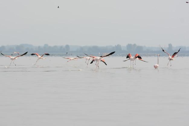 Mooi schot van de flamingo's in het kalme meer met bomen op de achtergrond op een mistige dag Gratis Foto