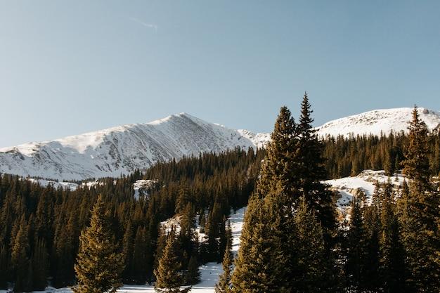 Mooi schot van een besneeuwde heuvel met groene bomen en een heldere hemel Gratis Foto