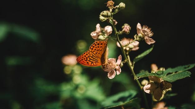 Mooi schot van een bloeiende installatie in een bos met een vlinder die nectar van het in een bos drinkt Gratis Foto