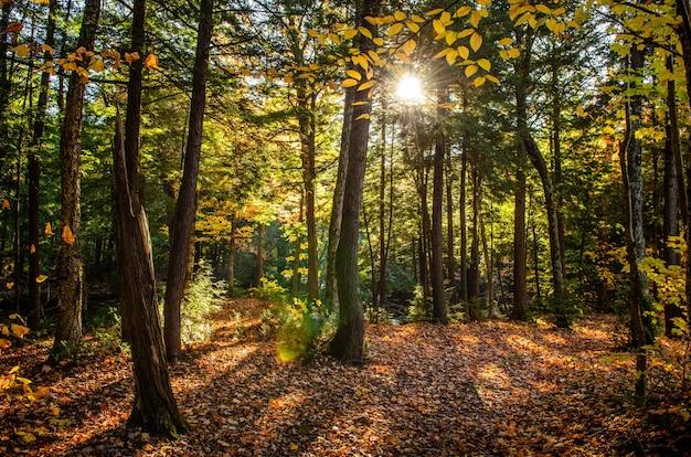 Mooi schot van een bos met groene bomen en gele bladeren ter plaatse op een zonnige dag Gratis Foto