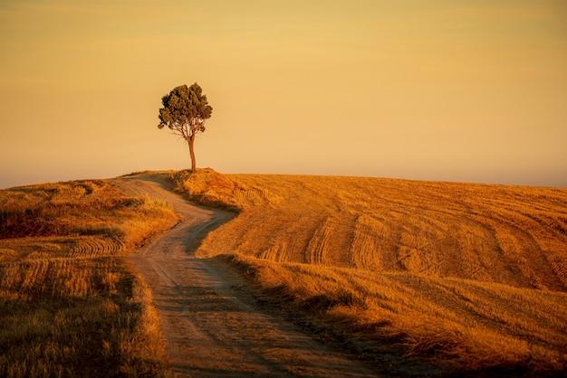 Mooi schot van een pad in de heuvels en een geïsoleerde boom onder de gele hemel Gratis Foto