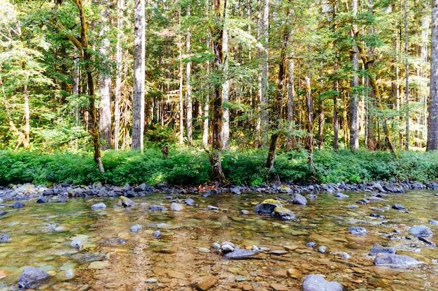 Mooi schot van een rivier vol rotsen in het midden van een bos Gratis Foto