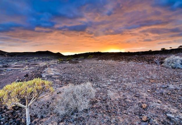 Mooi schot van een rotsachtig struikgebied onder de zonsonderganghemel in de canarische eilanden, spanje Gratis Foto