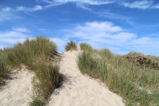 Mooi schot van een zanderige heuvel met struiken en een blauwe hemel Gratis Foto