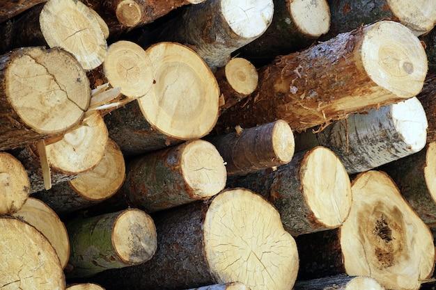 Mooi schot van gesneden houten logboekenbos Gratis Foto