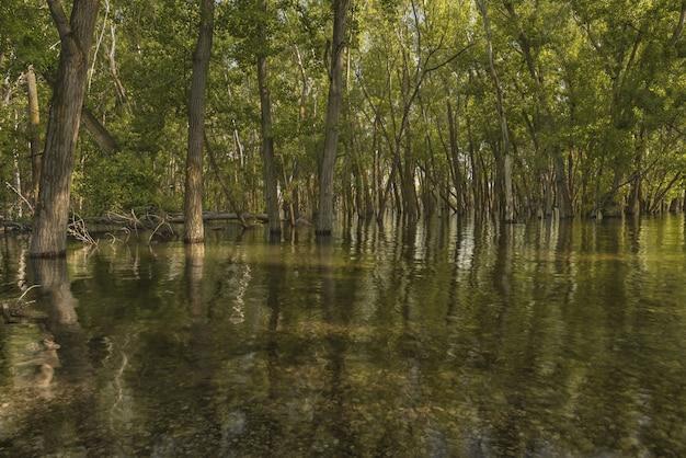 Mooi schot van groene doorbladerde bomen in het water in het bos Gratis Foto