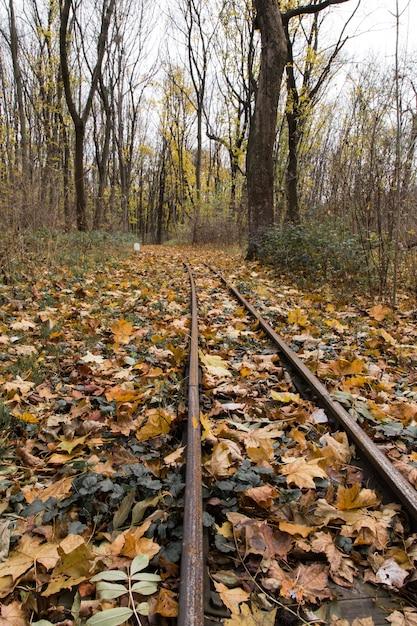 Mooi schot van kleurrijke bladeren aan de spoorweg op een zonnige dag Gratis Foto