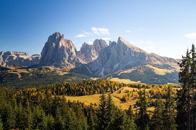 Mooi schot van met gras begroeide heuvels bedekt met bomen in de buurt van bergen in dolomieten, italië Gratis Foto
