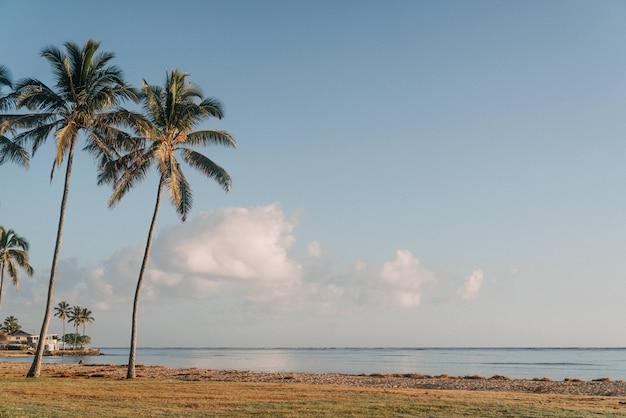 Mooi schot van palmbomen in de kust Gratis Foto
