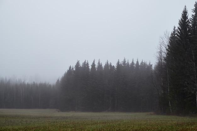 Mooi shot van een bos tijdens mistig weer Gratis Foto
