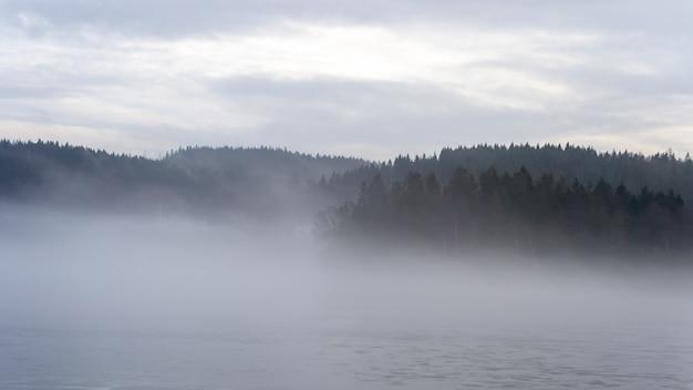 Mooi shot van een dennenbos bedekt met mist Gratis Foto