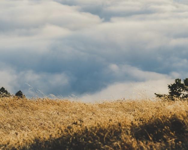 Mooi shot van een droog grasveld met bewolkte hemel Gratis Foto