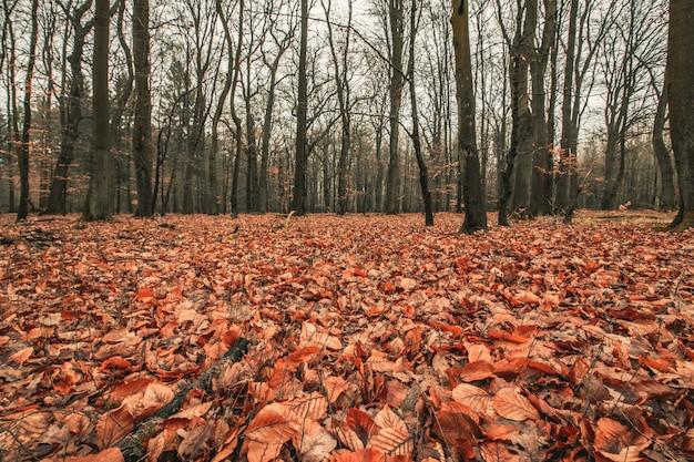 Mooi shot van een griezelig bos met een sombere lucht Gratis Foto