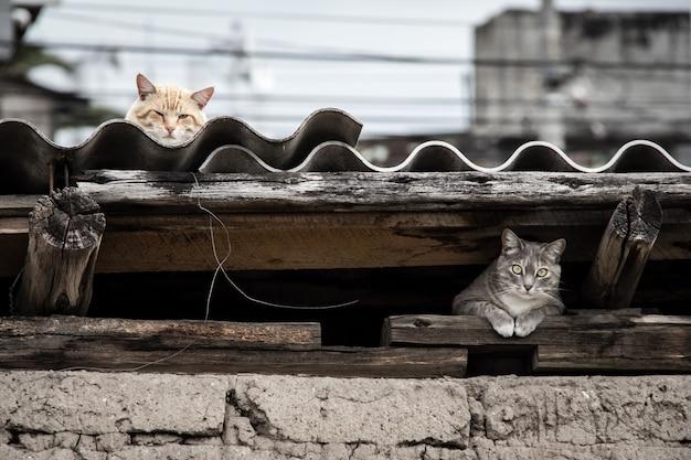 Mooi shot van een grijze kat die zich onder het dak verstopt terwijl de andere kat bovenaan rust Gratis Foto