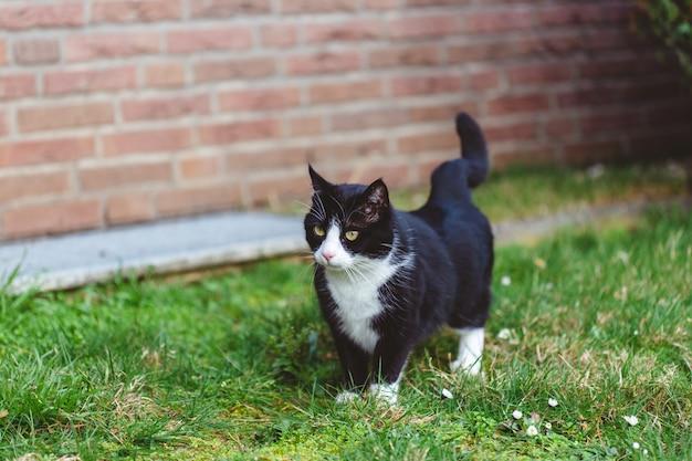 Mooi shot van een schattige zwarte kat op het gras voor een muur gemaakt van rode bakstenen Gratis Foto