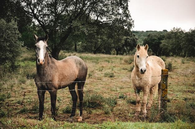 Mooi shot van twee paarden achter een hek met bomen Gratis Foto
