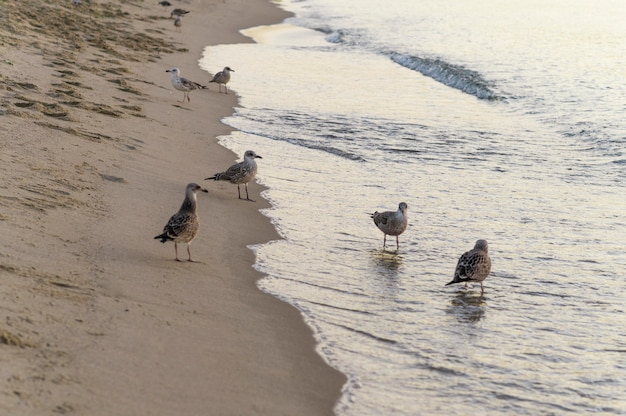 Mooi strand levensstijl concept Gratis Foto