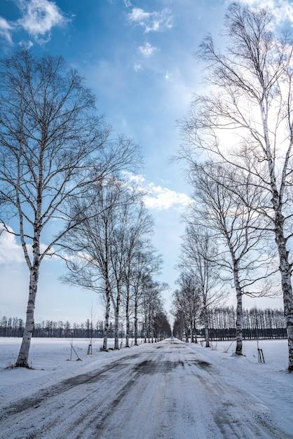 Mooie bladloze boom in de winter Premium Foto