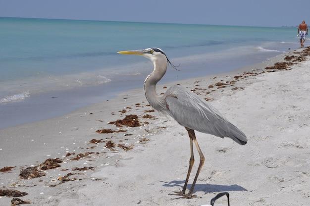Mooie blauwe reiger die zich op het strand bevindt en geniet van het warme weer Gratis Foto