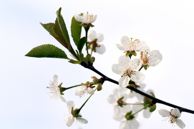 Mooie bloeiende bloem Gratis Foto