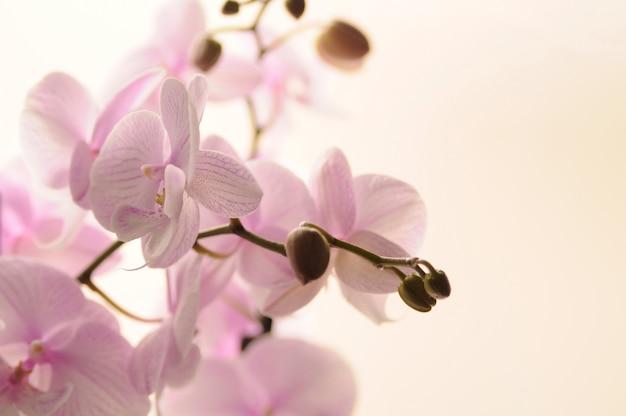 Mooie bloeiende orchidee geïsoleerd op wit. roze orchidee bloem. Gratis Foto