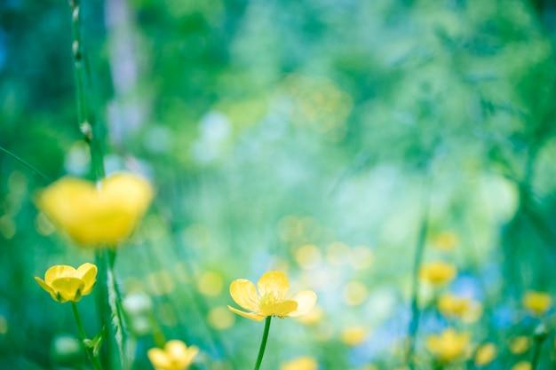 Mooie bloeiende zomer abstracte achtergrond Premium Foto