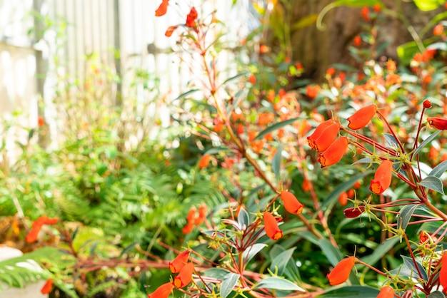 Mooie bloemdecoratie in de tuin Premium Foto