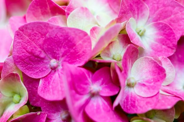Mooie bloemen in de natuur, kopie ruimte. Premium Foto