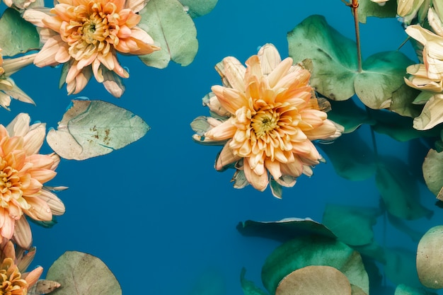 Mooie bloemen in water Gratis Foto
