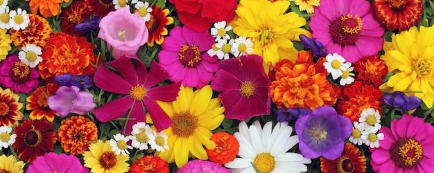 Mooie bloemen voor groet of ansichtkaarten. Premium Foto