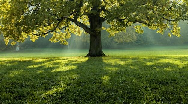 Mooie boom midden in een met gras bedekt veld met de boomgrens op de achtergrond Gratis Foto