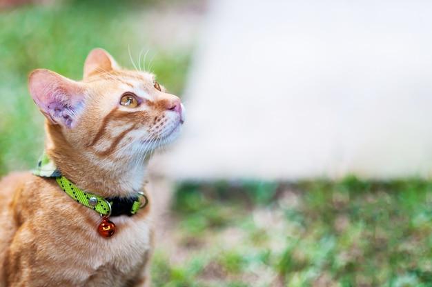 Mooie bruine binnenlandse kat in groene tuin - leuk dierlijk achtergrondconcept Gratis Foto