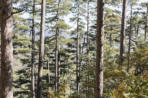 Mooie dag buiten in het bos Gratis Foto