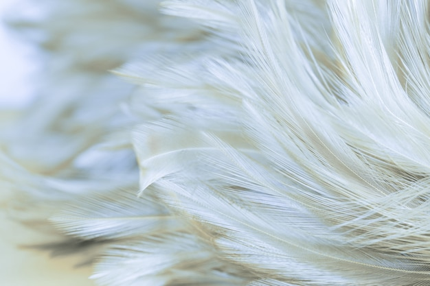 Mooie de textuur abstracte achtergrond van de kippenveer, zachte nadruk Premium Foto