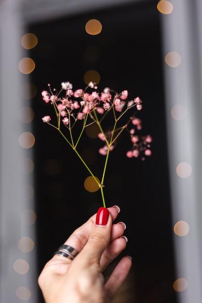 Mooie decoratie schattige kleine gedroogde kleurrijke bloemen op donker zwart, behang. Gratis Foto