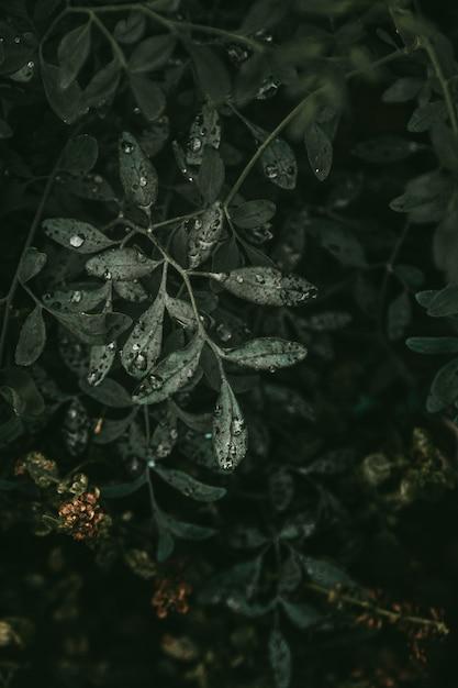 Mooie druppeltjes op bladeren van groene plant Gratis Foto