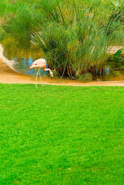 Mooie flamingo op het gras in het park Gratis Foto